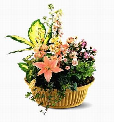 Singaporeflower Funerals for Singapore