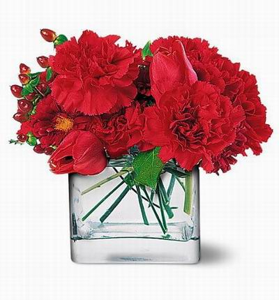Floristwide Carnations for Asia