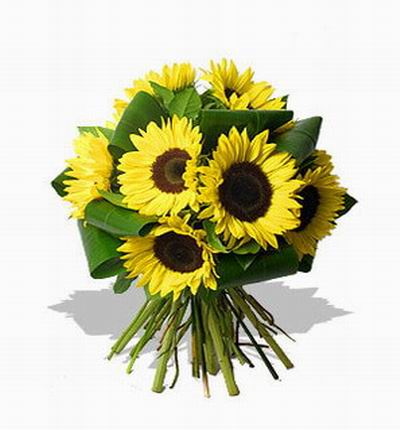 Singaporeflower Sunflowers for Singapore